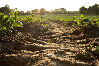 Europski zeleni plan: Komisija pokrenula javno savjetovanje o novoj strategiji EU-a za zaštitu tla